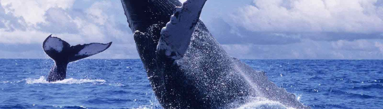 Los Cabos con Gaia Travel Network
